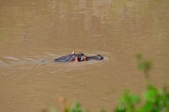 DDR_4043 (Santiago Sanz Romero) Tags: kenya wildlife animales ngc