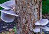 17-12-25 rinde alt pilz flüg dsc09044-1 (u ki11 ulrich kracke) Tags: baumstumpf flügel pilz textur treppe