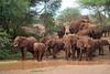 Elephants approaching to water (Vladimir Nardin) Tags: amboseli kenya africa 2017 group lake water drinking approaching
