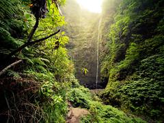 Green Cauldron - Madeira, Portugal (Sebastian Bayer) Tags: grün olympus pflanzen sonne levada wasserfall omdem5ii wasser licht omd wanderung madeira urlaub natur portugal