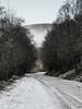 Winter Walk (sskelman) Tags: hermitage dunkeld perthshire scotland uk trees winter