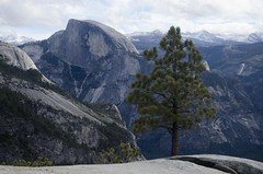 A Tree on Yosemite Point (speed6ump) Tags: pan american highway california yosemite national park valley bicycle tour touring cycle adventure pine tree point half dome