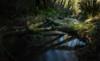 shadows, reflections, light, and me... (Alvin Harp) Tags: toledo oregon us20 stream reflections lightandshadow shadows le longexposure sonyilce7rm2 fe2470mmf28gm leefilters nd9 december 2017 fallentrees logs naturesbeauty nature alvinharp