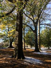 IMG_5547.jpg (proximity2nature) Tags: olmstedlinearpark snow atlanta georgia unitedstates us