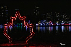 Maple lights (Carrie YL) Tags: christmas lights canada coquitlam lafargelake winternight canon towncenterpark metrovancouver bc