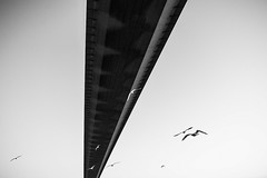 Bridge (alejo.365shoots) Tags: bridge building massive istanbul bird blackandwhite bw