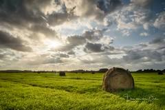 Rolling in the deep (Ellen van den Doel) Tags: goeree 2017 landscape landschap augustus nature overflakkee outdoor zonsondergang evening sunset natuur goedereede zuidholland nederland nl
