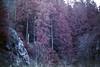 film (La fille renne) Tags: film analog 35mm lafillerenne canonae1program 50mmf18 owax owaxinfraredcolor400 infrared infraredcolor infraredfilm ir landscape nature lake