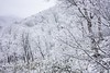 White forest... (Syahrel Azha Hashim) Tags: winter sonyimages nature coldweather colorimage destination snow simple trees moment 2017 details beautiful travel forest sonya7m2 ilce7m2 colors hakuba sony nopeople japan environment