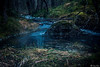 AY6A5510 (fcruse) Tags: cruse crusefoto 2018 vinter canon5dmarkiv natur skog nature forest tyrestanationalpark longexposure stockholm sweden se tyresta