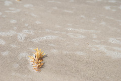 DSC_0145 (xsouthbound) Tags: vacation 2017 florida savannah georgia cocoabeach church pier flowers photography photographer hobbyphotographer landscape waterscape macro exterior interior urbanexploration historic riverstreet