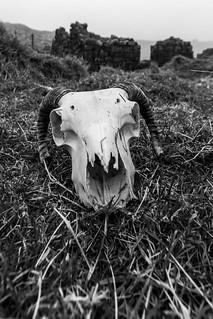 Foggin Tor Skull