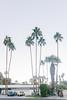 Porsches (JoelZimmer) Tags: 35mmf2d california cars nikond750 palmsprings palmtrees porsche unitedstates us