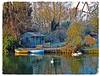 Cambridge Riverside Garden in Winter (Davey's Shots) Tags: winterscene summerhouse baretrees swans dingy lawn swan reflections cambridge chesterton rivercam frost