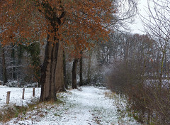 Oak tree (joeke pieters) Tags: 1370520 panasonicdmcfz150 eik oak woold winterswijk achterhoek gelderland nederland netherlands holland gelderschlandschap hijink sneeuw snow snowscape landschap landscape landschaft paysage bomen boom trees tree hek fence
