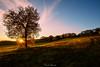 Oggi, per me una splendida giornata (Danilo Agnaioli) Tags: canon6d alberi sole raggi autunno prati tramonto cielo rosso canon1740 umbria italia natura perugia