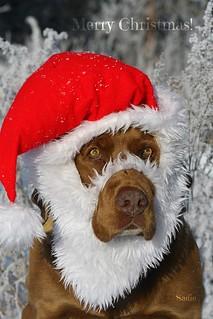 Naughty or Nice? Take your time, Santa NOSE ;-)
