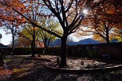 After the Rain (Gene Ellison) Tags: trees yard fallcolor sunstar