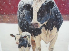 Merry  Christmas greetings (excellentzebu1050) Tags: christmaswish christmas farm dairycows closeup livestock animal cow calf animalportraits outdoor snow cattle newlife newborn winter coth5