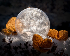 it's beginning to look a lot like ... (marianna_a.) Tags: frozen soap bubbles winter hydrangea flower plant nature bokah marianna armata