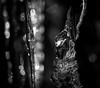 Icicle BW (MortenTellefsen) Tags: icicle ice istapp bw blackandwhite blackandwhiteonly svarthvitt norway nature norwegian natur norsk monochrome light crystal water freezing