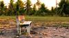 Sementeira-1110087 (Carlos A. Nascimento) Tags: banco parque coqueiros sombras sol shadows bench aracaju sementeira