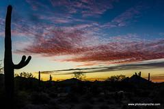 Red sky sunrise (doveoggi) Tags: 8032 arizona scottsdale mcdowellsonoranpreserve desert sunrise saguaro clouds