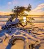 Lust for life (fedorlashkov) Tags: lakeladoga karelia island winter snow dawn frost pine sun skerries roots tree beach