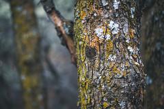Burnt Peak Trail (Shutter Theory) Tags: burntpeaktrail angelesnationalforest sierrapelonamountains hikinh hiking losangelescounty lakehughes sawmillmountain burntpeak oldtrail liebremountain