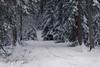 Into the woods... (Aufklatscher) Tags: wood trees snow path trail winter cold cloudy white landscape nature schnee landschaft weis bäume wald schwarzwald blackforest weg spuren einsam natur kalt wolkig eos6dmarkii 100mmf28lmacro