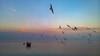 Boats and Seagulls (Topolino70) Tags: nokia lumia 930 mobile sea lake boat seagull sunset dusk water