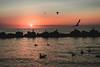 Somewhere I feel free... (b_represent) Tags: landscape landschaft silhoutte sea meer ostsee balticsea wustrow birds sunset