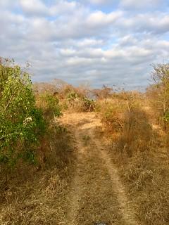 Zimbabwe Cape Buffalo Hunt 52