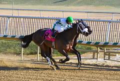 "2017-12-26 (5) r2 Elvis Trujillo on #8 No More Excuses (JLeeFleenor) Tags: photos photography ""laurel park"" maryland md ""maryland races"" horse jockey جُوكِي ""赛马骑师"" jinete ""競馬騎手"" dżokej jocheu คนขี่ม้าแข่ง jóquei žokej kilparatsastaja rennreiter fantino ""경마 기수"" жокей jokey người horses thoroughbreds equine equestrian cheval cavalo cavallo cavall caballo pferd paard perd hevonen hest hestur cal kon konj beygir capall ceffyl cuddy yarraman faras alogo soos kuda uma pfeerd koin حصان кон 马 häst άλογο סוס घोड़ा 馬 koń лошадь laurelpark marylandraces races outdoors outside winter cold"
