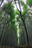 嵯峨野.嵐山竹林小徑 (sunnyha) Tags: japan japón japão japon kyoto kioto quioto sagano saganobambooforest bamboo plant green outdoors sky color colour colours travel arashiyama photographier photograph day sunnyha sonyilce7rm2 sony a7rll a7rm2 1635mm ef1635mmf4lisusm 嵯峨野竹林の小径 竹林の小径 日本 京都 嵯峨野 嵐山 竹林小徑 嵯峨野嵐山竹林小徑 攝影 寫真
