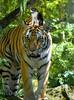 Feline Buddies (Scott 97006) Tags: cats zoo animals cute tiger kitty funny