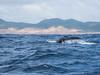 Whale Fin (Schuetzi81) Tags: südafrika buckelwal wal urlaub