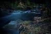 AY6A5514 (fcruse) Tags: cruse crusefoto 2018 vinter canon5dmarkiv natur skog nature forest tyrestanationalpark longexposure stockholm sweden se tyresta