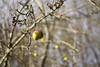 """""""Pomme, pomme, t'es-tu fait mal ? J'ai le menton en marmelade, le nez fendu et l'oeil poché !"""" Le Perche, Orne, Normandie, France (martine_vise) Tags: tree apple appletree garden winter wintertime winterlight sunlight bokeh countryside rurallife nature naturelover naturephotography leperche orne france normandie fruit fruittree ilovenature wintergarden stormlight branches countrylife"""
