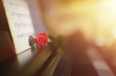 Melody of Light.. (KissThePixel) Tags: piano pianoforte music musicscore sheetmusic musicbook book rose pinkrose flower pinkflower softbokeh soft gold goldbokeh goldenbokeh macro stilllife stilllifephotography nikon nikondf nikkor nikkor12 f12 light sunlight creativeart creativephotography fineart