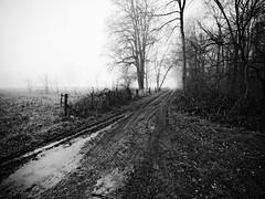 Campagne picarde V (steph20_2) Tags: panasonic lumix gh3 m43 714 monochrome monochrom paysage countryside picardie oise hiver winter noir noiretblanc ngc blanc black bw white skanchelli
