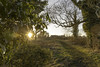 20180107-End of a Perfect Day (Damien Walmsley) Tags: picture countryside perfect day perfectday sunlight starburst path light knowle solihull