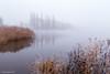 misty lake (soundmoods) Tags: fog coldpool winter autumn lake