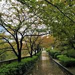 By the Meguro-gawa thumbnail