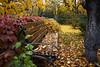 Autumn Bench (Dr. Harout) Tags: yerevan armenia autumn fall colors leaves bench tree plant yellow outdoor sony ilce7rm2 batis225 zeiss zeissbatis carlzeiss distagon225t երեւան հայաստան աշուն տերեւ տերեւաթափ գոյն ծառ բոյս բացօդեայ գունաւոր նստարան