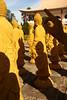 _MG_5193 (Malu Green!) Tags: fozdoiguaçu fozdoiguassu paraná parquedasaves cataratasdoiguaçu cataratasdoiguassu tríplicefronteira aves bird tucano pavão arara papagaio flamingo pato duck ganso cisne swan beijaflor cobra snake serpente borboleta butterfly araraazul quati selfie yellow yellowraincoat raincoat capadechuva picapau woodywoodpecker cachoeira waterfall catarata falls mesquita mosque jewish judeu buda buddha templo temple buddhist budista buddhism budismo estatua statue amarelo