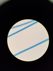 20171203_144357 (scientiaannotator) Tags: microscopic known hair fibers assignment11