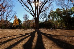 Shadow (namhdyk) Tags: tree forest woods autumn winter canon canonpowershot canonpowershotg7x