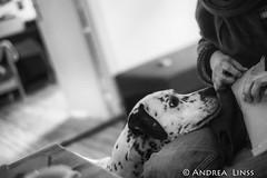 Michel.... (andrealinss) Tags: dessau andrealinss 35mm schwarzweiss bw blackandwhite portrait michel