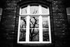 Juxtaposition 107.365 (ewitsoe) Tags: monochrome ewitsoe canon eos6dii city window 365 107 bnw blackandwhite cityscape trees reflecting reflection strret urban poznan poland tree shadows light